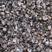 gewassen schelpen bij Rieks Meinders bij Rieks Meinders